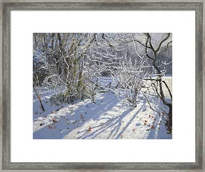 Hoar Frost Framed Print by Andrew Macara