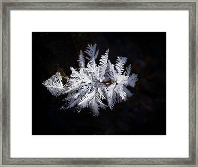 Hoarfrost Framed Print by Jean Noren