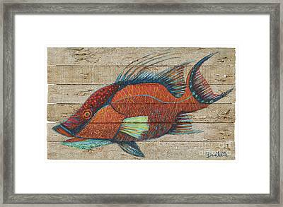 Hogfish On Lobster Trap Wood Framed Print by Danielle Perry