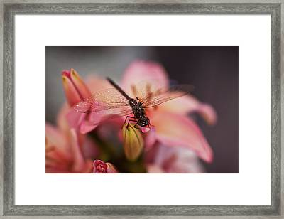Holding On Framed Print by Mike Reid