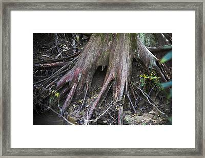 Holding On Framed Print by Paul Anderson