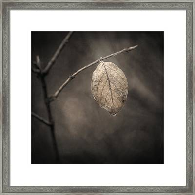 Holding On Framed Print by Scott Norris