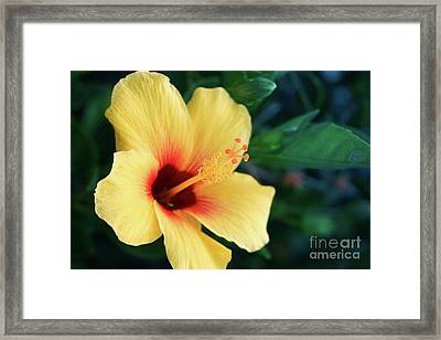 Holding The Light Framed Print by Sharon Mau