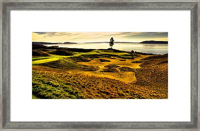 Hole #15 - The Lone Fir At Chambers Bay Framed Print by David Patterson