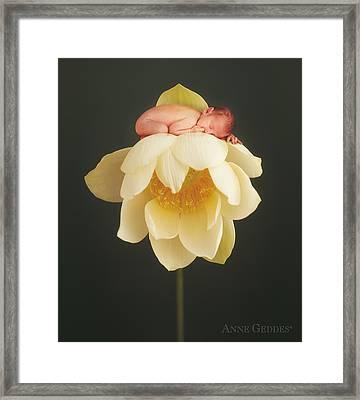 Hollie In Lotus Framed Print by Anne Geddes