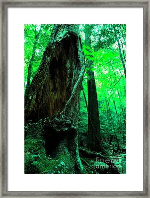 Hollow Maple Tree Framed Print by Thomas R Fletcher