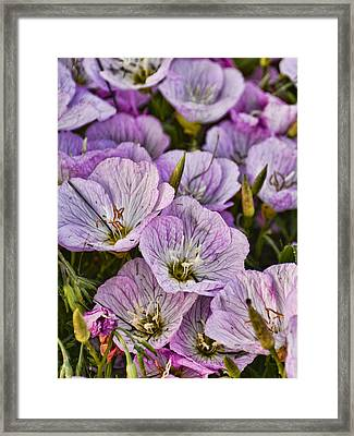 Holly Hocks - 1 Framed Print by Greg Jackson