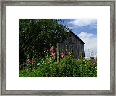Hollyhock Barn Framed Print by Michael L Kimble