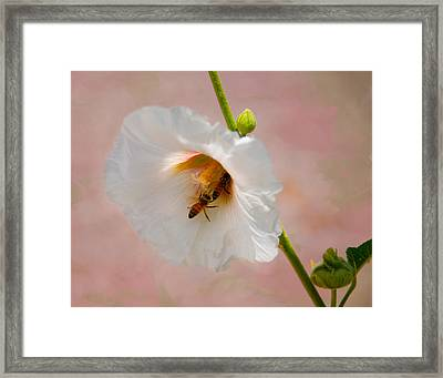 Hollyhocks For Dinner Framed Print by Carolyn Dalessandro