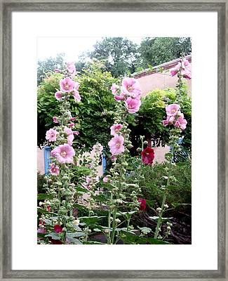 Hollyhocks Taos New Mexico Framed Print by Wayne Potrafka