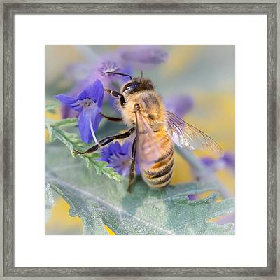 Honey Bee 3 Framed Print by Jim Hughes