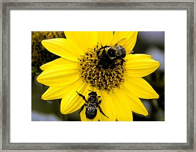 Honey Bees Framed Print by David Lee Thompson