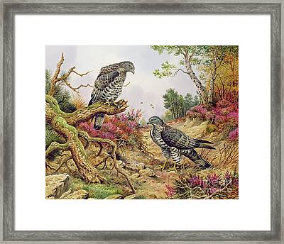 Honey Buzzards Framed Print by Carl Donner