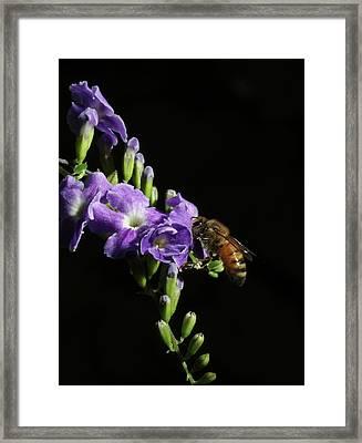 Honeybee On Golden Dewdrop Framed Print by Richard Rizzo