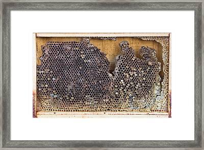 Honeycomb Framed Print by Tom Gowanlock
