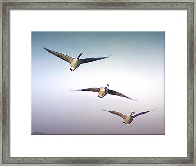 Honk If You Love Flying Framed Print by Brian Wallace