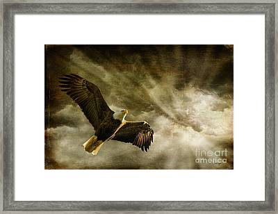 Honor Bound Framed Print by Lois Bryan