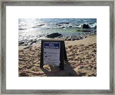 Honu Feeding And Basking Framed Print by Grant Wiscour