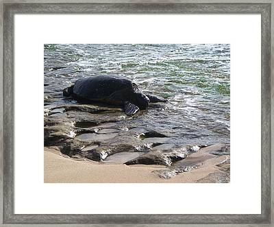 Honu In Lanikea Surf Framed Print by Grant Wiscour