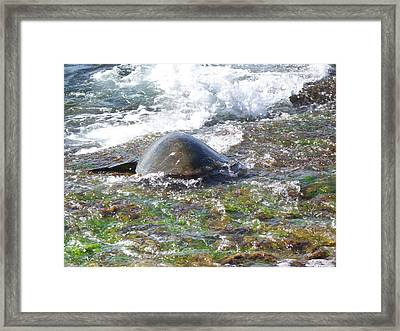 Honu Waverider Framed Print by Grant Wiscour
