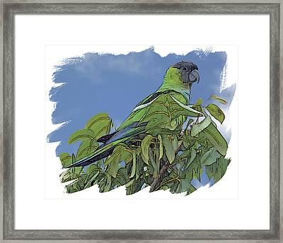 Hooded Parakeet Framed Print by Larry Linton