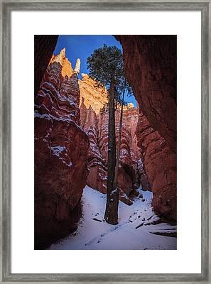Hoodoos Of Bryce Framed Print by Edgars Erglis