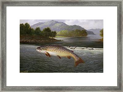 Hooked But Not Landed Framed Print by A Roland Knight