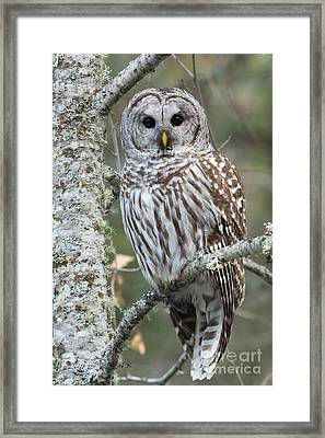 Hoot Hoot Hoot Are You Framed Print by Beve Brown-Clark Photography