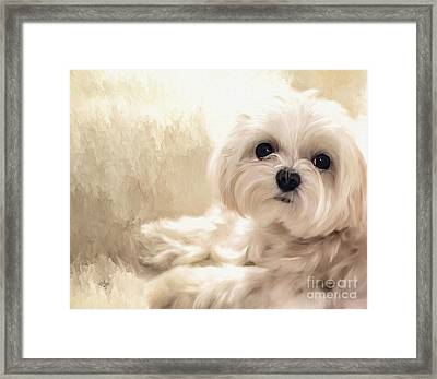 Hoping For A Cookie Framed Print by Lois Bryan