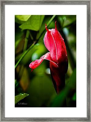 Horned Blossom Framed Print by Christopher Holmes