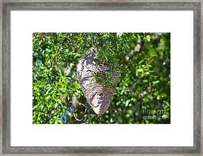 Hornets Home Framed Print by Al Powell Photography USA