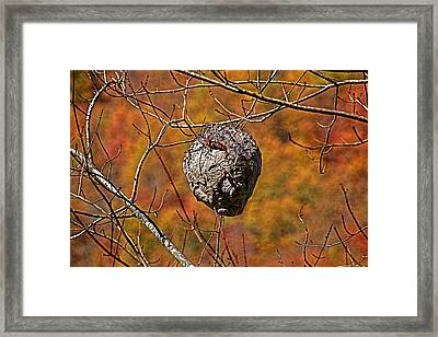 Hornet's Nest Framed Print by HH Photography of Florida