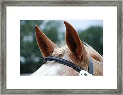 Horse At Attention Framed Print by Jennifer Ancker