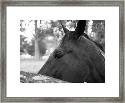 Horse At Fence Framed Print by Lara Morrison