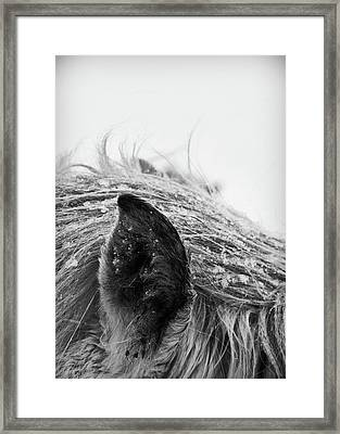 Horse, Close-up Of Ear And Mane Framed Print by Vilhjalmur Ingi Vilhjalmsson