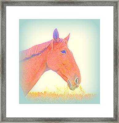 This Horse Is Ready To Face Anything  Framed Print by Hilde Widerberg