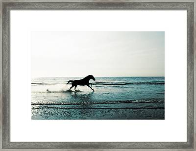 Horse Framed Print by Fine Arts
