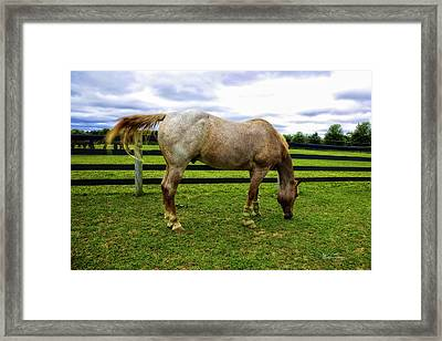Horse In The Field Framed Print by Madeline Ellis