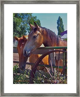 Horse Framed Print by Italian Art
