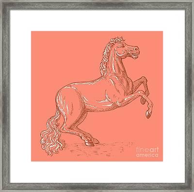 Horse Prancing Framed Print by Aloysius Patrimonio