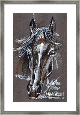 Horse Study Framed Print by Daliana Pacuraru