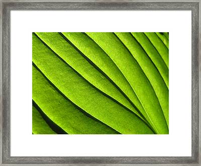 Hosta Leaf 2 Framed Print by Dustin K Ryan