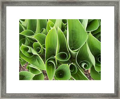 Hostas 4 Framed Print by Anna Villarreal Garbis