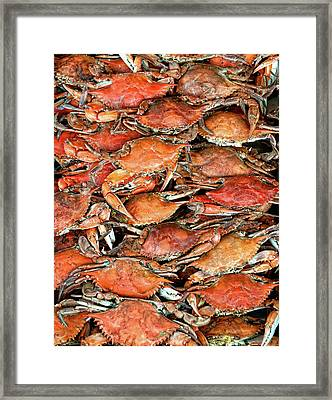 Hot Crabs Framed Print by Sky Noir Photography by Bill Dickinson