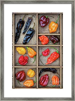 Hot Off The Grid Framed Print by Tim Gainey