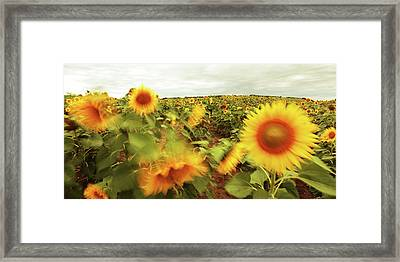 Hot Summer Wind Framed Print by Floriana Barbu