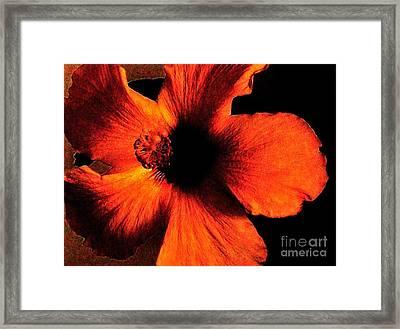 Hotfire Hibiscus Framed Print by Marsha Heiken