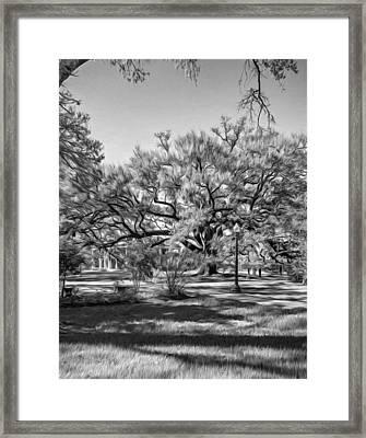 Houmas House Plantation 3 - Bw Framed Print by Steve Harrington