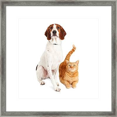 Hound Dog And Orange Cat Together Framed Print by Susan Schmitz