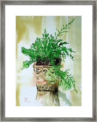 Asparagus Fern Framed Print by Pete Maier